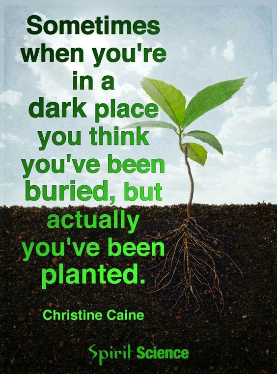 Sometimes when you're in a dark place you think you've been buried,  but actually you've been planted.
