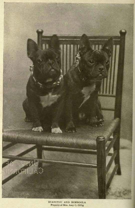 Pin By Nadja Karner On Bouledogue French Bulldog Art French Bulldog Dog Vintage Dog