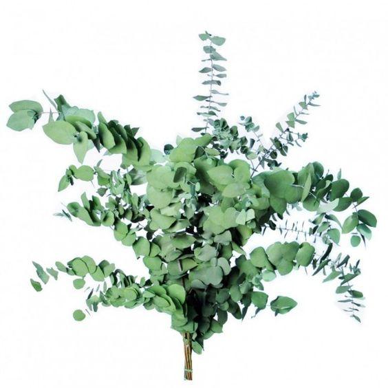 Eucalyptus stuartiana stabilisé 4 coloris sur infinienature.com