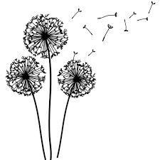 R sultat de recherche d 39 images pour dessin pissenlit - Dessin fleur pissenlit ...