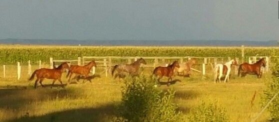 Sunshine and the ponies