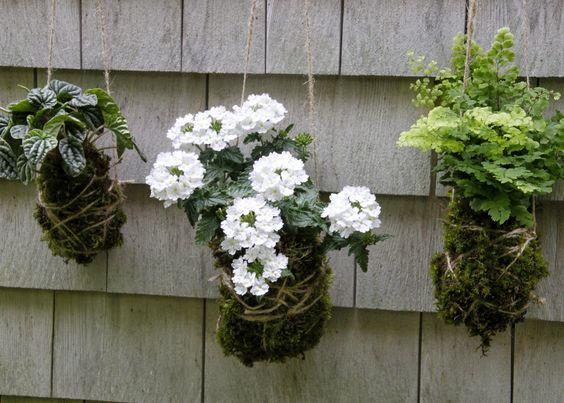 moss art garden kokedama - Google Search