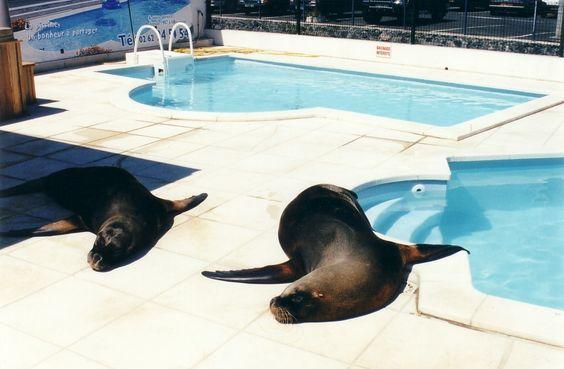 Ils aiment l'eau des piscines Desjoyaux !