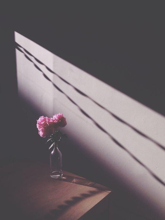 As vezes uma flor qualquer nos indicam algo profundo <3