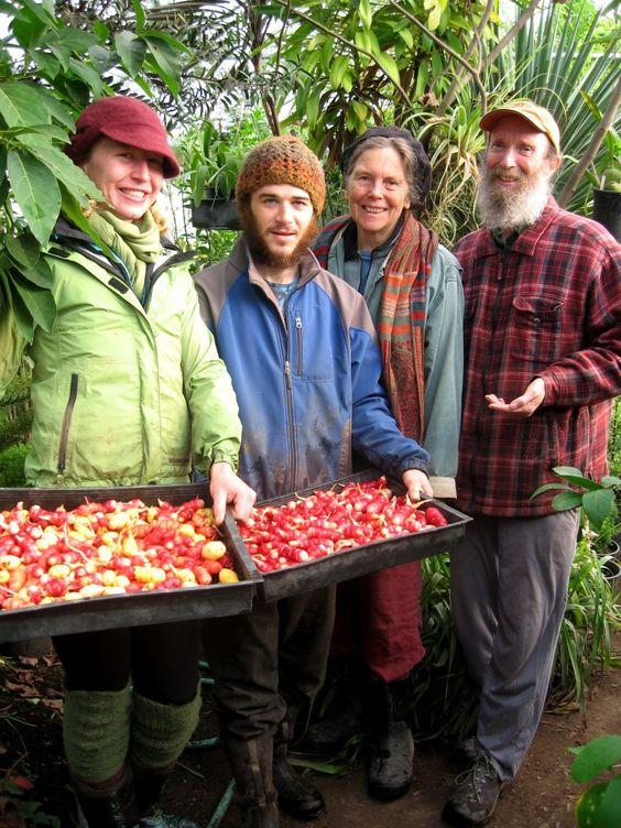 Andean Root Vegetables