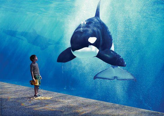 Parque aquático perde cada vez mais clientes, lucros e patrocinadores!