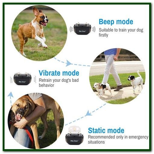 Best Shock Collar For Small Dogs Our Picks Of The Best Dog Shock