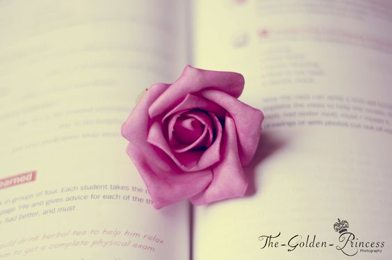 Book's Rose by ThenGolden Princess