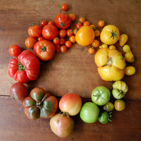 tomatoes: Rainbow Tomatoes, Tomato Color, Colour Wheel, Favorite Food, Heirloom Tomatoes, Tomato Wreath