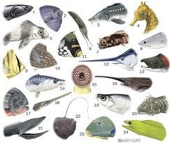 fishes - Google Search