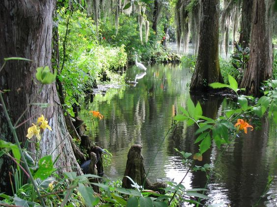 Francis Marion National Forest, South Carolina [2272x1704][OC] - Imgur