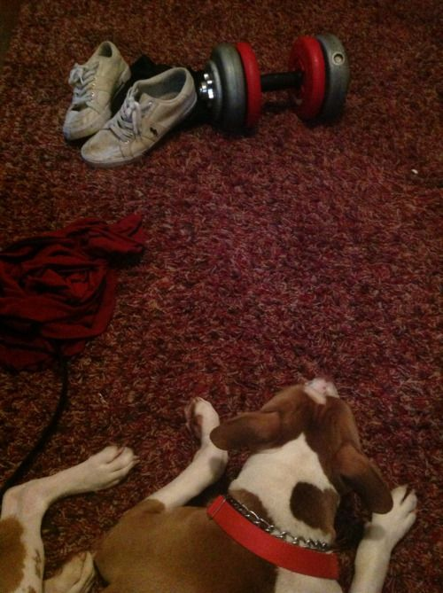 sircar10:  Naked Floor#pitbulls #dog breeds #canine pet #dogs #pitbull puppy