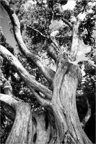 Alter Baum - Gaspar Avila - old tree