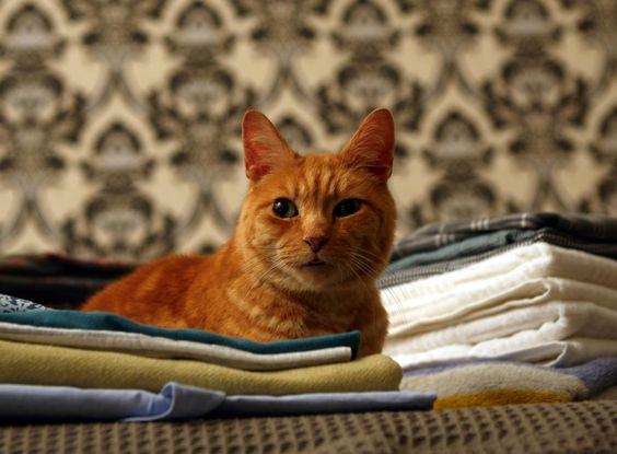 Mine kitty peeing in closet thank