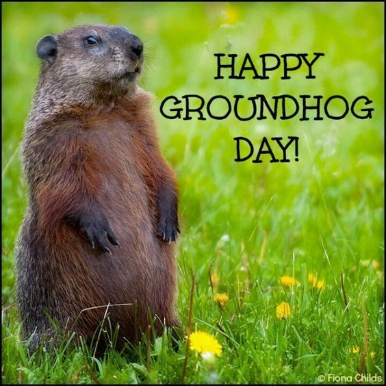 Happy Groundhog Day Image Quote february 2 groundhog day quotes groundhog phil groundhogs day groundhogs day quotes groundhog day happy groundhogs day happy groundhog day quotes: