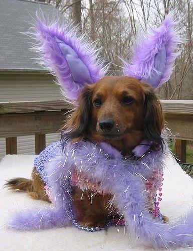dog bunny. Lol!