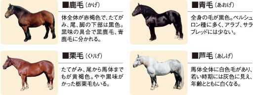 【ばん馬の毛色】ばんえい十勝オフィシャルホームページ
