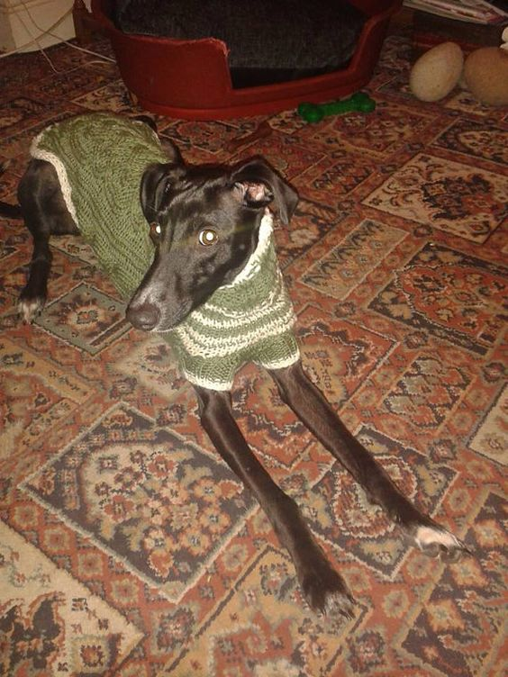 Knitting Pattern For Whippet Coat : Whippets, Sweater patterns and Sweaters on Pinterest