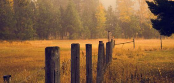 Receita publica IN sobre a apresentação da declaração de propriedade rural