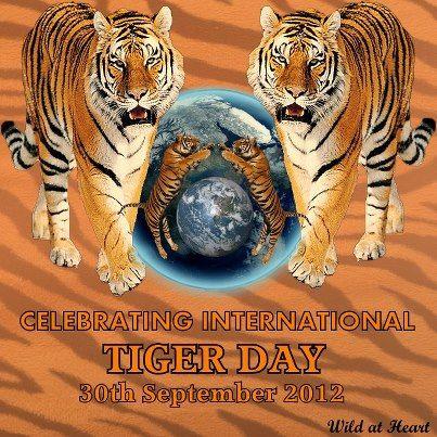 Journèe internationale du tigre