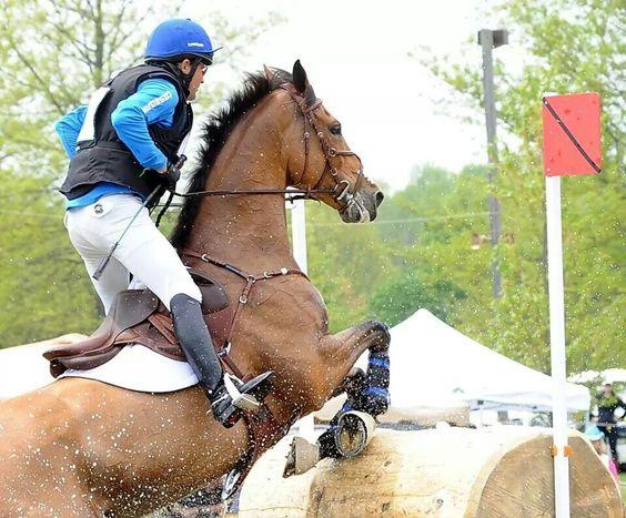 Extreme sport horse