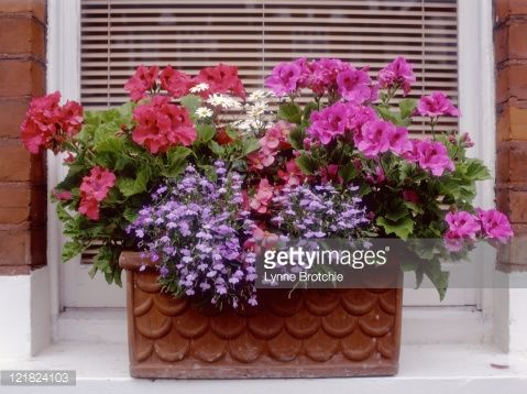121824103-mixed-planting-in-terracota-windowbox-gettyimages.jpg (479×358)