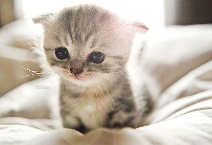 ¿Cómo tratar a un gatito recién nacido? - Animal Care