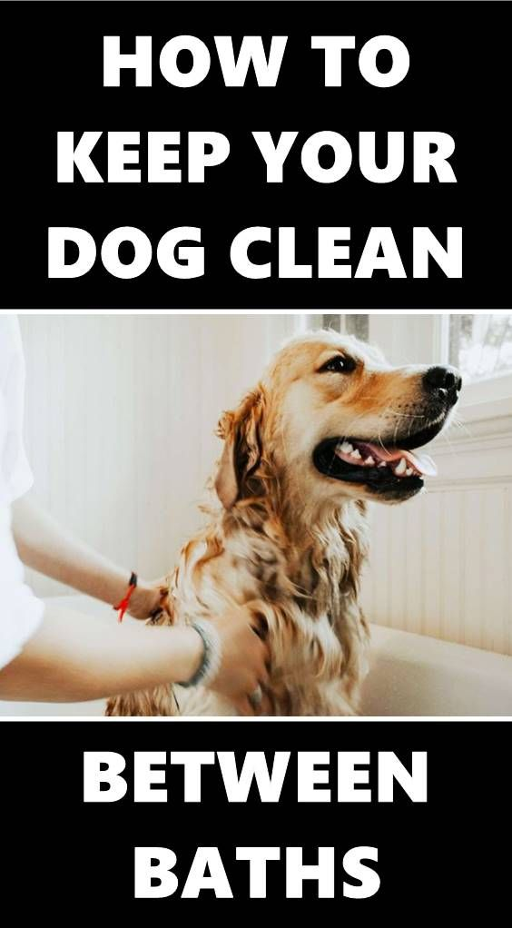 7 Tips To Keep Your Dog Clean Between Baths Dog Cleaning Dog Smells Dogs