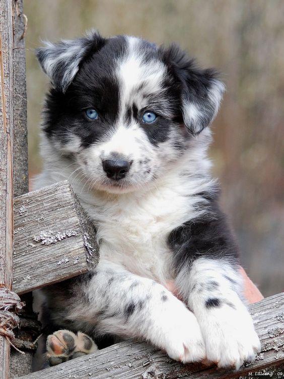 Good Natured Medium Dogs