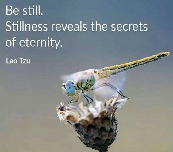 Be still. Stillness reveals the secrets of eternity.