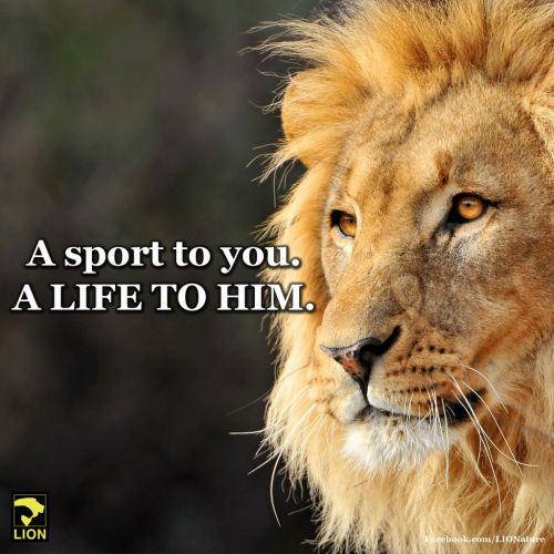 DEMAND Delta Airlines join the growing list of international airlines that have announced they will no longer transport lion, tiger, elephant and rhino hunting trophies! Both South Africa Airways (SAA) and Emirates SkyCargo have declared they are banning the transport of endangered wildlife on flights out of Africa.  Now it is DELTA'S TURN TO BAN THE TRANSPORT OF WILD ANIMAL TROPHIES. PLZ Sign and Share Widely!: