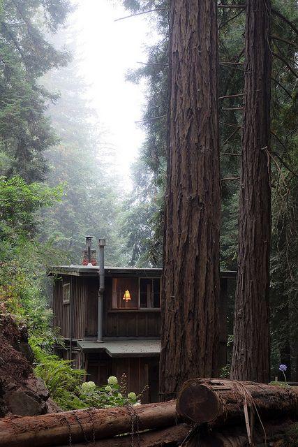 Uma pequena casa na ... floresta.