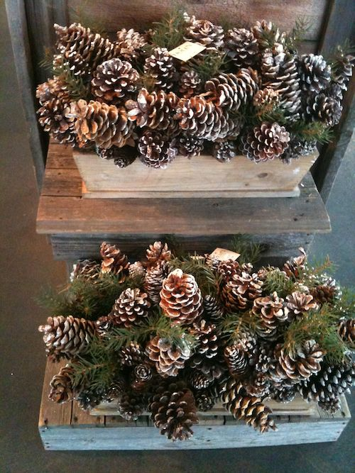 pinecone baskets