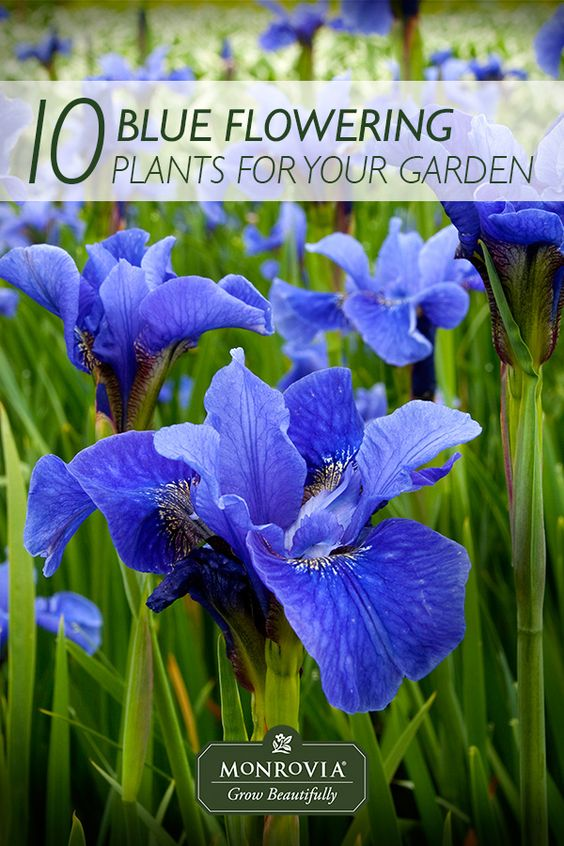 Enjoy Gardening Without The Breaking Your Back With This: Pinterest • The World's Catalog Of Ideas