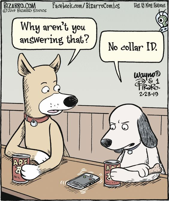 No Collar Id Dog Jokes Funny Cartoons Dog Comics
