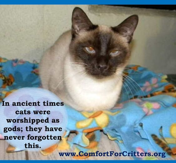 Our Inspiration!!! | Comfort for Critters