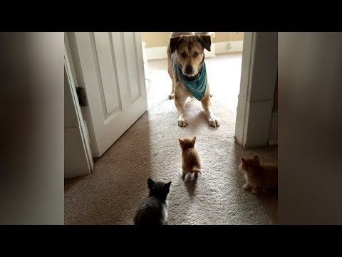You Won T Last 10 Seconds Without Laughing Ultra Funny Animal Videos Funny Animal Videos Funny Animals Animals