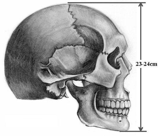 Resultado de imagen para pepakura skull helmet