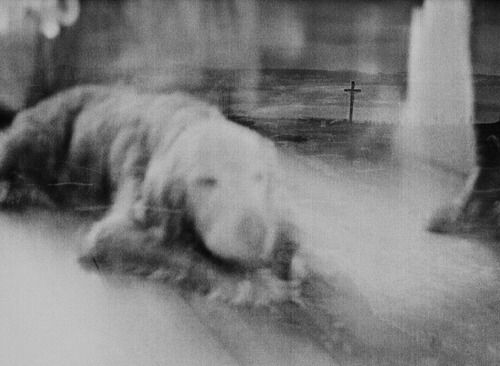 Alexandra Boucher.  She took a picture of her dying dog in 2010 and forgot about the film in the camera until she decided to take a picture of a cemetery 2 years later.  The result is an extraordinary unintentional double exposure...