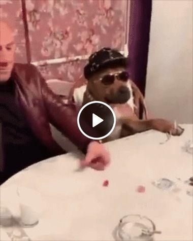 Esse é o cachorro mais gangster que você vai ver em toda sua vida!