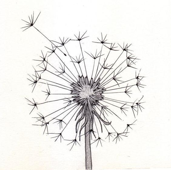 Dandelion sketch: