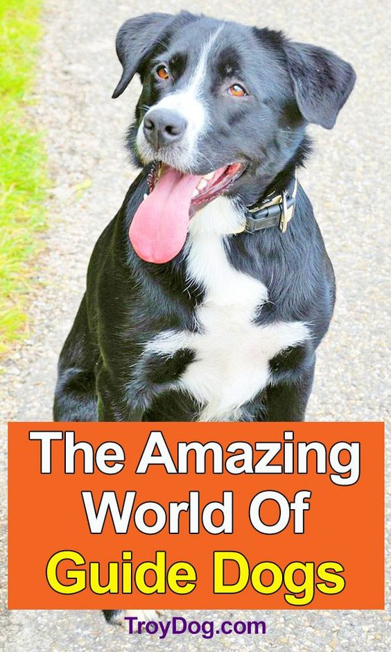 The Amazing World Of Guide Dogs In 2020 Guide Dog Dogs Expensive Dogs