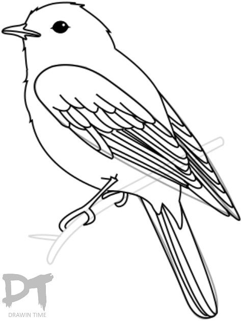 How To Draw A Bird With Images Bird Drawings Drawing Birds