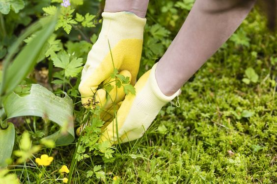 Weeds are bad, right? Not so fast. It's time to give weeds a chance. Learn about five edible weeds that are not only delicious but nutritious.