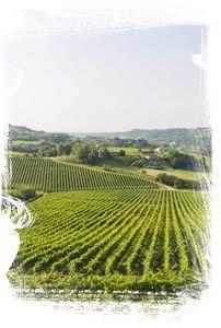 Rebuli Winery