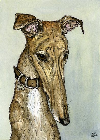 informative speech greyhound Here you'll find a list of good informative speech topics which will be added to   to be useful in pain control) herbs as medicine the history of greyhound dogs.