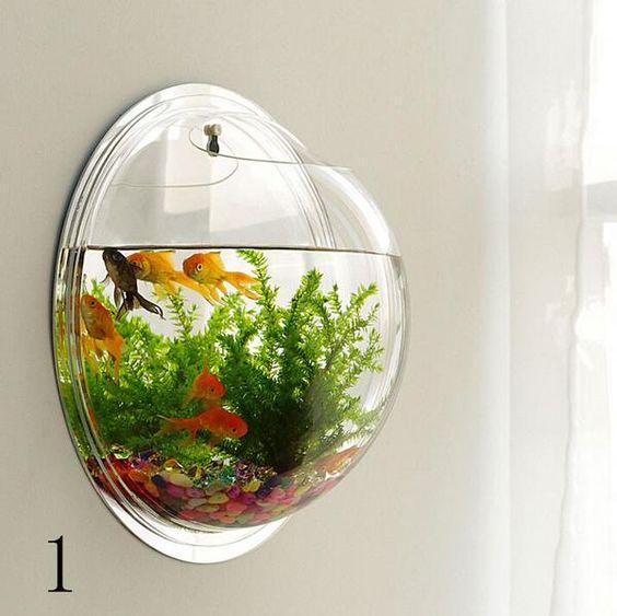 Wall type mini aquarium fish bowl plants fish and mini for Mini fish bowls