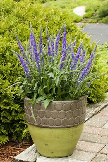Perennial containers container gardening ideas for Perennial container garden designs