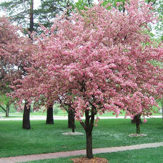 Selecting trees for your yard trees and shrubs red for Small flowering trees for front yard