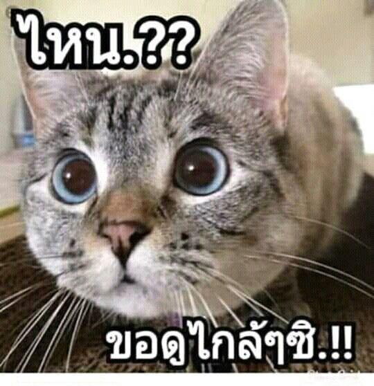 ป กพ นโดย Nutcharee Nimjaraun ใน ตลก ภาพตลก การ ต นตลก ส ตว